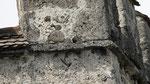 Mauersegler Stadtmauer Grabengut Thun, 4. Juli 20017