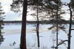 Lockerer Kiefernwald und offene Flächen wechseln sich ab