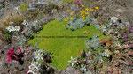 173 : patriotisches Blumenbouquet auf 3000 m am Oberrothorn 31.7.2020