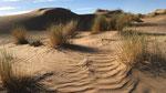 Lebensraum der Saharagrasmücke