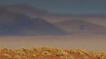 Namib Rand