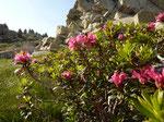 Pyrénées de flore et de roches