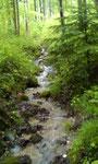 unser Stadtwald bietet soviel schöne Orte