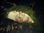 abgefallener oder abgeschnittener Pilz wurde erst am Baumstrunk befestigt und noch mit Moos geschmückt