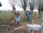 Baie de Somme: La plantation des fraisiers