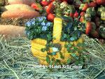 Kürbiskorb bepflanzt