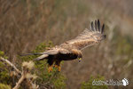Aquila Reale - Appennino Modenese