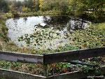 ein Teich mit Seerosen und einem Entenhaus