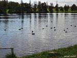 jetzt im Herbst gehört den Enten der See