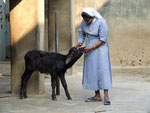Une Bufflonne orpheline