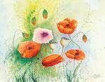 Mohnblumen | Aquarell | 40 x 30 cm cm | 2009