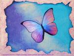 Butterfly .......80 x60 cm Acryl auf Leinwand ....... 250.--€