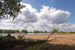 An der Elbe bei Kietz