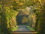 Der Weg am Aussichtsturm im Herbst