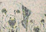 「presense Ⅱ」アクリル絵具 キャンバス 24×33cm 2015年