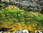 Yellowstone Nationalpark 2010 by Ralf Mayer