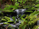 Olympic National Park - Washington 2011 by Ralf Mayer