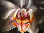 Orchidee - by Ralf Mayer