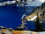 Crater Lake Nationalpark - Oregon by Ralf Mayer