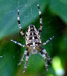 Spinne im Garten by Ralf Mayer