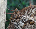 Schmetterling im Luisenpark by Ralf Mayer