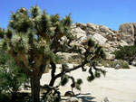 Joshua Tree Nationalpark - Kalifornien by Ralf Mayer