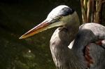 Fischreiher - Everglades Nationalpark by Ralf Mayer