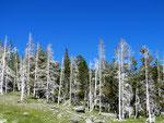 Yellowstone Nationalpark by Ralf Mayer