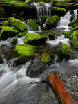Sol Duc Valley - Olympic National Park - Washington by Ralf Mayer