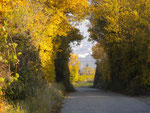 A walk through the wineyards in autumn