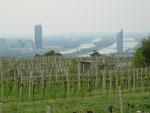 Blick vom Kahlenberg auf das neue Wien