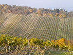 Wineyards at Nussberg
