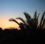 Sonnenuntergang über unserem Palmengarten