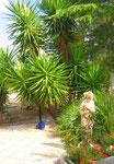 unsere Zisterne - umgeben von Palmen
