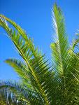 Palmen in unserem Garten