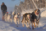 On tour with my huskies