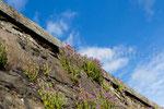 Im Garten von Stirling Castle