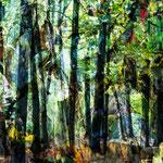 Transformation Wald I, Größe 70 x 70 cm, Chrashgrafik