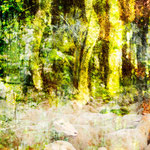 Transformation Wald II, Größe 70 x 70 cm, Chrashgrafik
