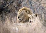 Leão/Lion