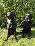 ... Labrador mit Labrador mit Labrador!