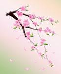 Sakura, 02-2012