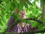 Gisèle dans le cerisier