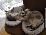 Zwei Kissen