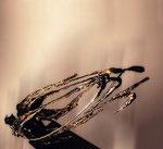 Separación.   40 x 70 x 28 cm. Metal   . 1997