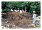 La vieille et les oies (70)