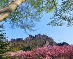 6.春の妙義山