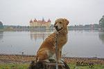 Blue und das Schloss Moritzburg - Oktober 2013