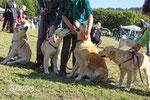 Wie bekommt man bloß drei Jung- und einen Althund (die Omi) ordentlich aufs Bild??