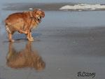 Roscoe im Urlaub an der Schlei